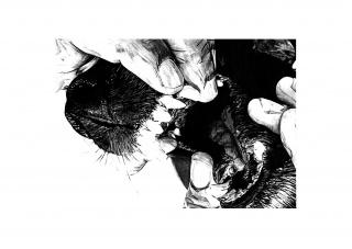 Quique Ortiz: Sin título, 2020. Grafito sobre papel. 21x29,7 cm. — Cortesía de la Galería Juan Silió