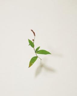 Suda Yoshihiro – Cortesía de la Galería Elvira González
