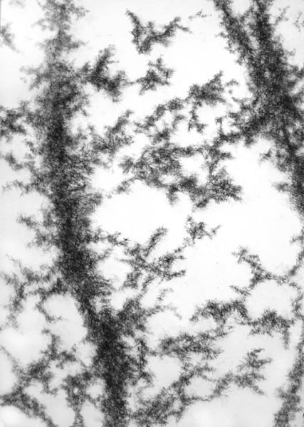 Nuria Ferriol, Hormigas en los pies, Barra grasa sobre papel, 100 x 70 cm., 2015
