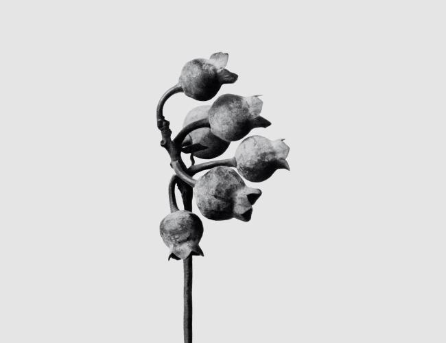 Karl Blossfeldt, Aire — Cortesía de Loewe Perfumes