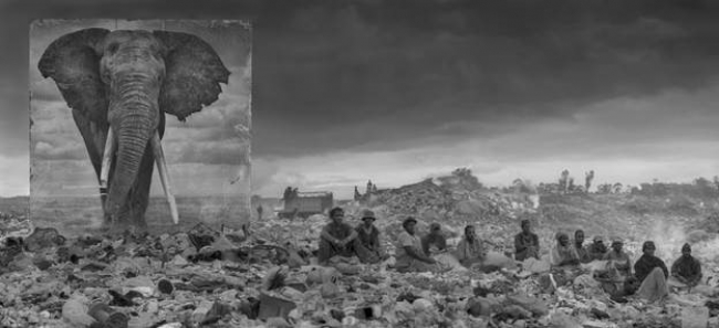 "Nick Brandt: ""Wasteland with elephant and residents"""
