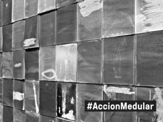 Acción medular