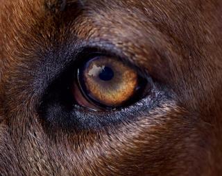 Danile Steegmann Mangrané, Fog Dog (Eye), 2019-2020 (detail). Giclée print. Image: Daniel Steegmann Mangrané — Cortesía de Kunsthalle Münster