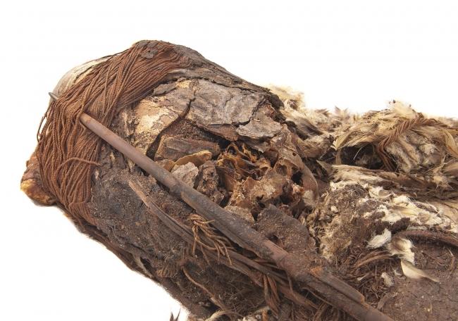 Chinchorro, trascender a la muerte. Imagen cortesía Museo Nacional de Historia Natural