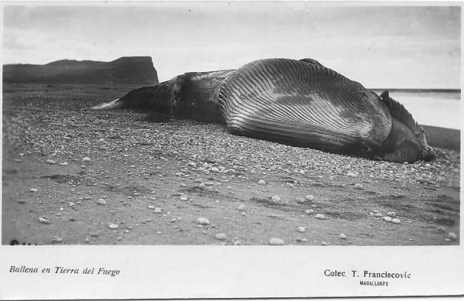 Thomas Franciscovic, Ballena en Tierra del Fuego — Cortesía del Centro de Arte Espronceda