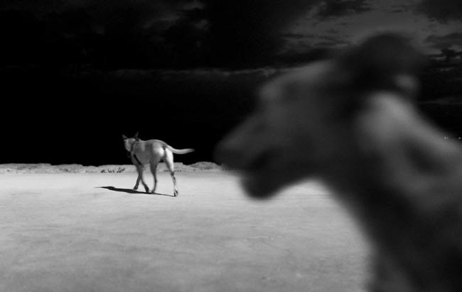 Imagem / Image: © João Miguel Barros, Entre o Olhar e a Alucinação / Between Gaze and Hallucination, #05.03. Cortesía del Museu de Berardo