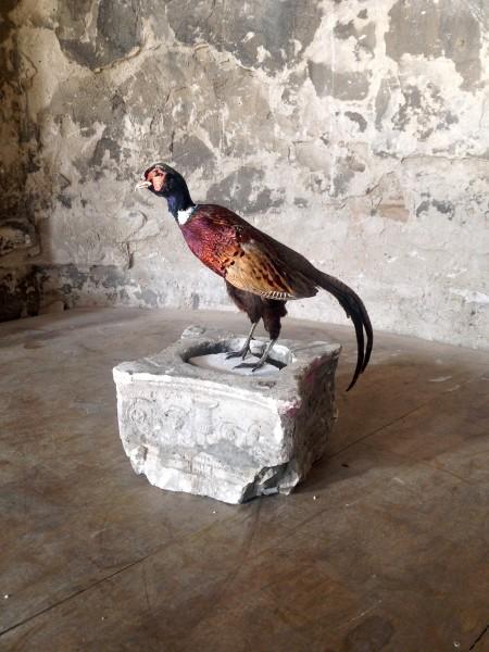 pheasants 2
