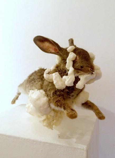 this rabbit edited