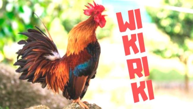 Cortesía de  Wikitoki