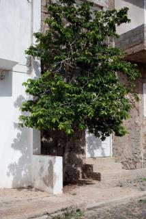 Catarina Botelho. A sombra do sol #5, 2019,  fotografía impresión inyección de tinta, 120 x 80 cm. — Cortesía de Galería silvestre