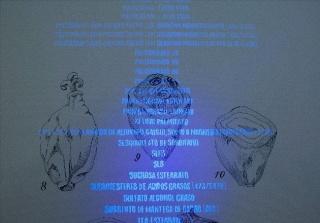 Luna BENGOECHEA. Elaeis Guineensis bulbo, 2018. Tinta negra y tinta sensible a la luz UV sobre papel Fabriano, 100 x 70 cm. Cortesía: Galería Lucía Mendoza, Madrid
