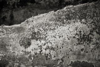 19PEN_0143©Lluís Ivern