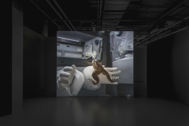 John Gerrard, X. laevis (Spacelab), 2017. Foto: Thomas S.G. Farnetti, Wellcome photographer – Cortesía del Museu d'Art Contemporani de Barcelona (MACBA)