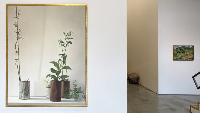 nstallation view of the exhibition Nature at Sicardi Ayers Bacino, 2020 — Cortesía de Sicardi   Ayers   Bacino