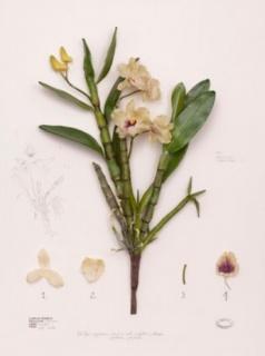 Alberto Baraya. Minilirio, 2006. General expeditions, herbarium of artificial plants