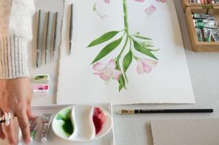 Preparando Mesa Para Curso Ilustración Acuarela Botánica
