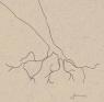 Raízes de uma Coleção: Alves Redol e (seus) Ilustradores