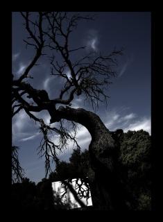 Ombra d'alzina - © Manel Esclusa — Cortesía del Institut d'Estudis Fotogràfics de Catalunya
