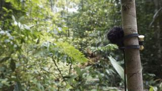 entangled, Pablo Sanz. Detalle de un micrófono construido por el artista. Amazonia central, 2015
