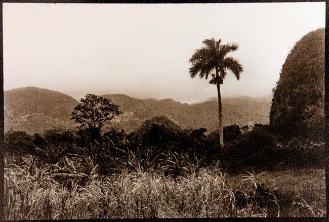 Lonely Palm Tree (Cuba, 2013). Foto Oskar Ohlson — Cortesía del Institut d'Estudis Fotogràfics de Catalunya (IEFC)