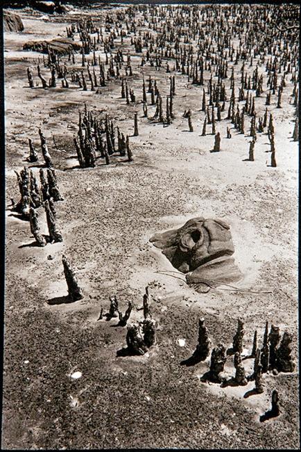 Mangrove roots (Madagascar, 2001). Foto Oskar Ohlson — Cortesía del Institut d'Estudis Fotogràfics de Catalunya (IEFC)