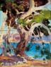 Hermen Anglada-Camarasa, Pi de Formentor, ca.1922. Óleo sobre tabla, 63 x 49 cm Es Baluard Museu d'Art Modern i Contemporani de Palma, depósito Col·lecció Ajuntament de Palma