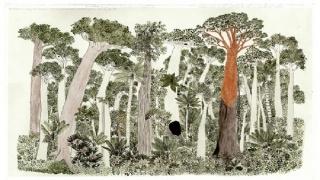 Bosque de la Vega