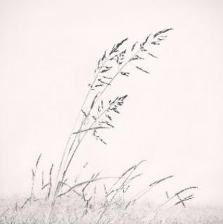 Taller de fotografía artística en blanco y negro