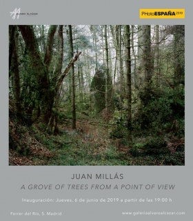 Juan Millás, A grove of trees from a point of view