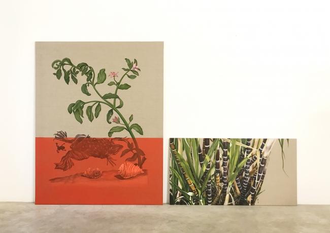 Gabriela Bettini, Saccharum officinarum, 145 x 114 y 60 x 114 cm., O?leo sobre lino, 20188 — Cortesía de Tasman Projects