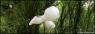 Eugenio Ampudia. Nubes de Memoria  Video en loop — Cortesía de Daniel Silvo