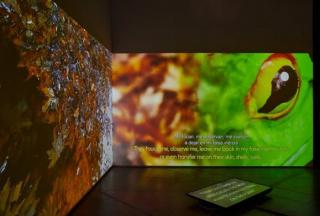 Residencia de producción artística sobre medio ambiente y salud