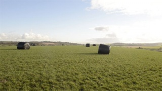 Adam Wiseman, Somerset field