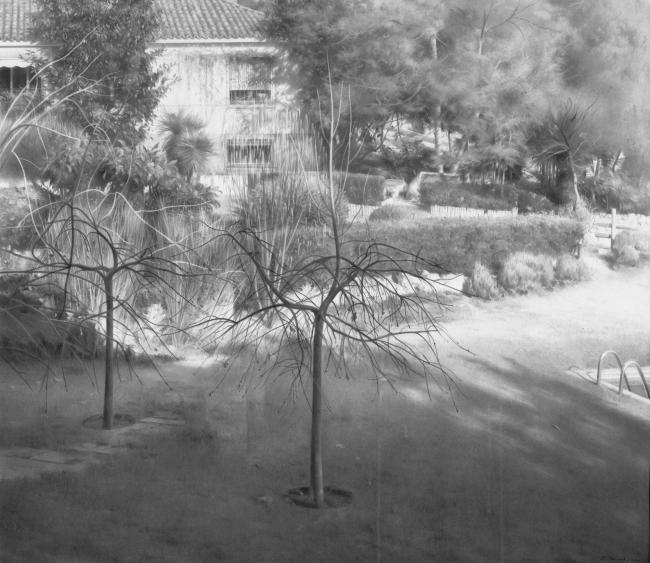 Eduardo Naranjo, Jardín en invierno, grafito, 2000 — Cortesía de Acerca Comunicación