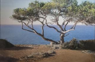 Antoni Mas. Ischia, oli sobre tela, 130 × 195 cm.