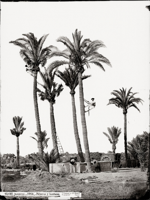 Casa fotográfica de Laurent, Palmeras y huertanos. Elche, 1870-1872 – Cortesía de Promoción del Arte
