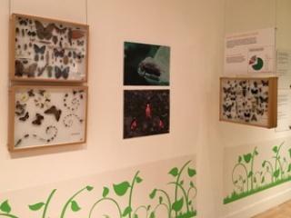 Insectos en el Museo_MNCR