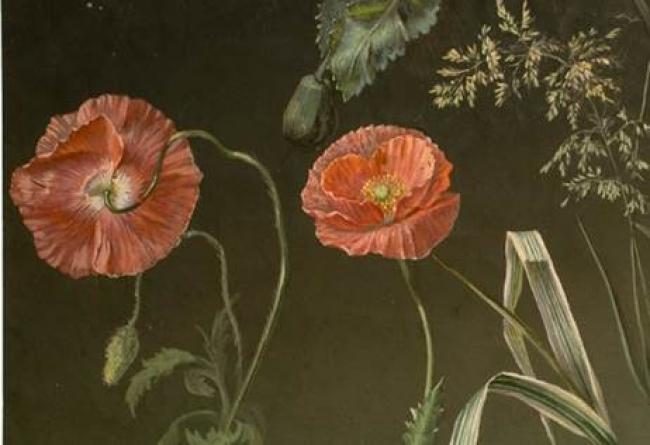 Paisaje Y Flores Renovación Del Dibujo Académico En El