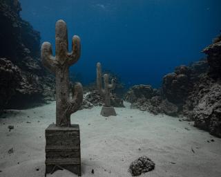 Claudia Comte, Underwater Cacti Series, 2019. East Portland Fish Sanctuary, Alligator Head Foundation in Portland, Jamaica. Commissioned by TBA21–Academy. Photo: F-Stop Movies — Cortesía de Thyssen-Bornemisza Art Contemporary (TBA21)