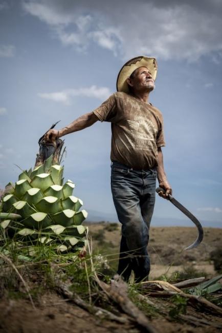 Enrique Noriega Vargas. Don Pablo en el campo de magueyes.