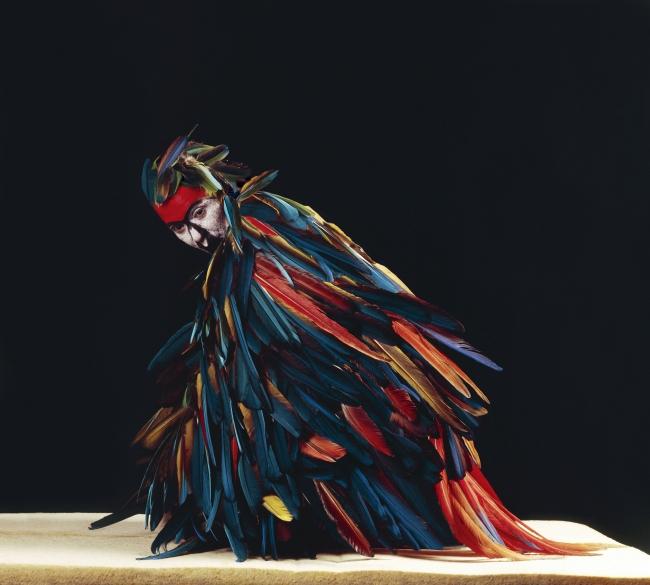 Cecilia Paredes. Papagallo, 2005. Galería Blanca Berlín — Cortesía del Museo Universidad de Navarra