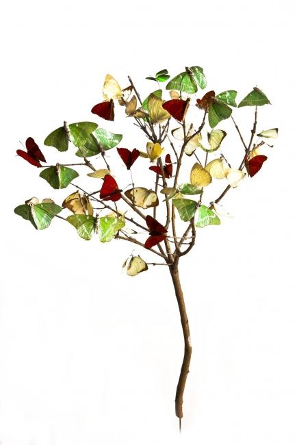 María Fernanda Cardoso, Arbolito - Little tree, Ed. 2/5 [Edition of 5 + 2AP], 2010. Digital pigment print on 300 gr. cotton