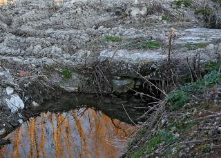 Naturaleza Cambiante II