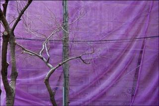 árbol 01