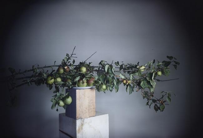 Richard Learoyd  3 branch apples #2  © Richard Learoyd. Courtesy of the artist and Fraenkel Gallery, San Francisco. Cortesía de la Fundación MAPFRE | #loquehayquever en España: las exposiciones son para el verano