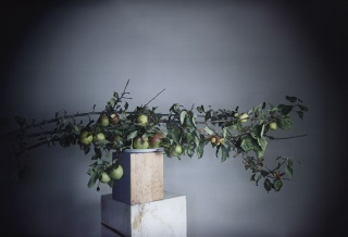 Richard Learoyd  3 branch apples #2  © Richard Learoyd. Courtesy of the artist and Fraenkel Gallery, San Francisco. Cortesía de la Fundación MAPFRE