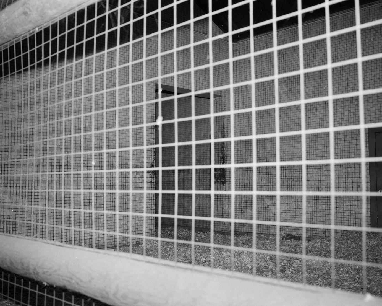 Enclosure X (2018) - Joanna Piotrowska
