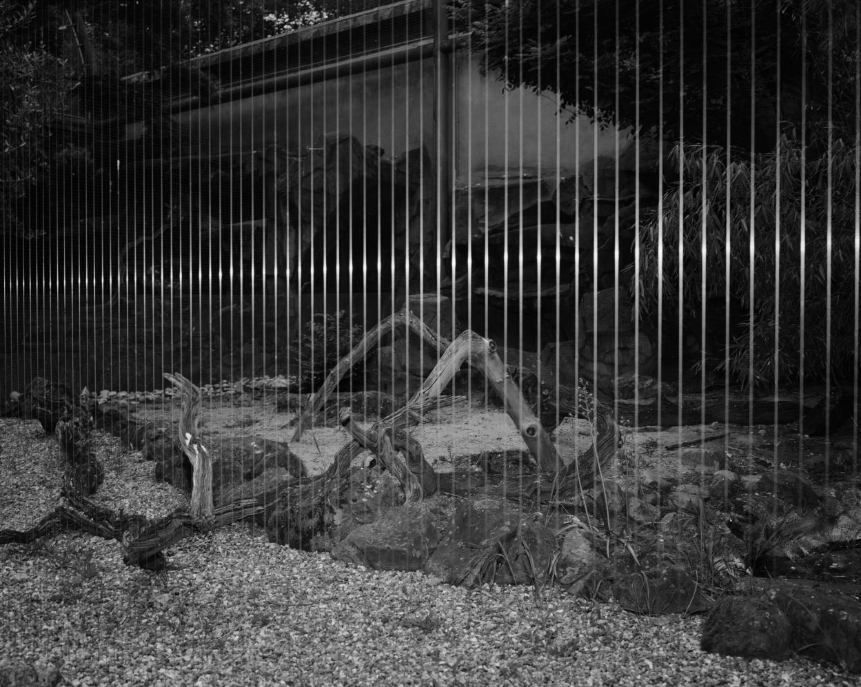 Enclosure XII (2018) - Joanna Piotrowska