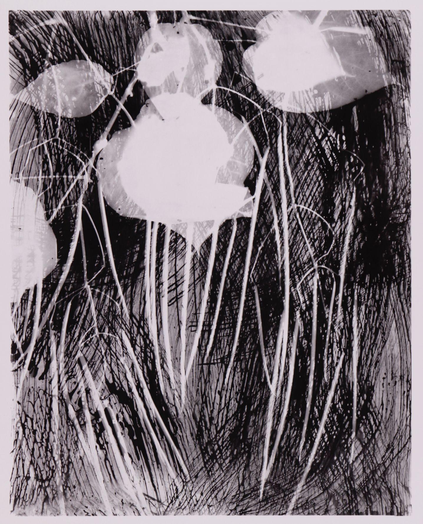 Haricot vert (2005) - Ilan Wolff