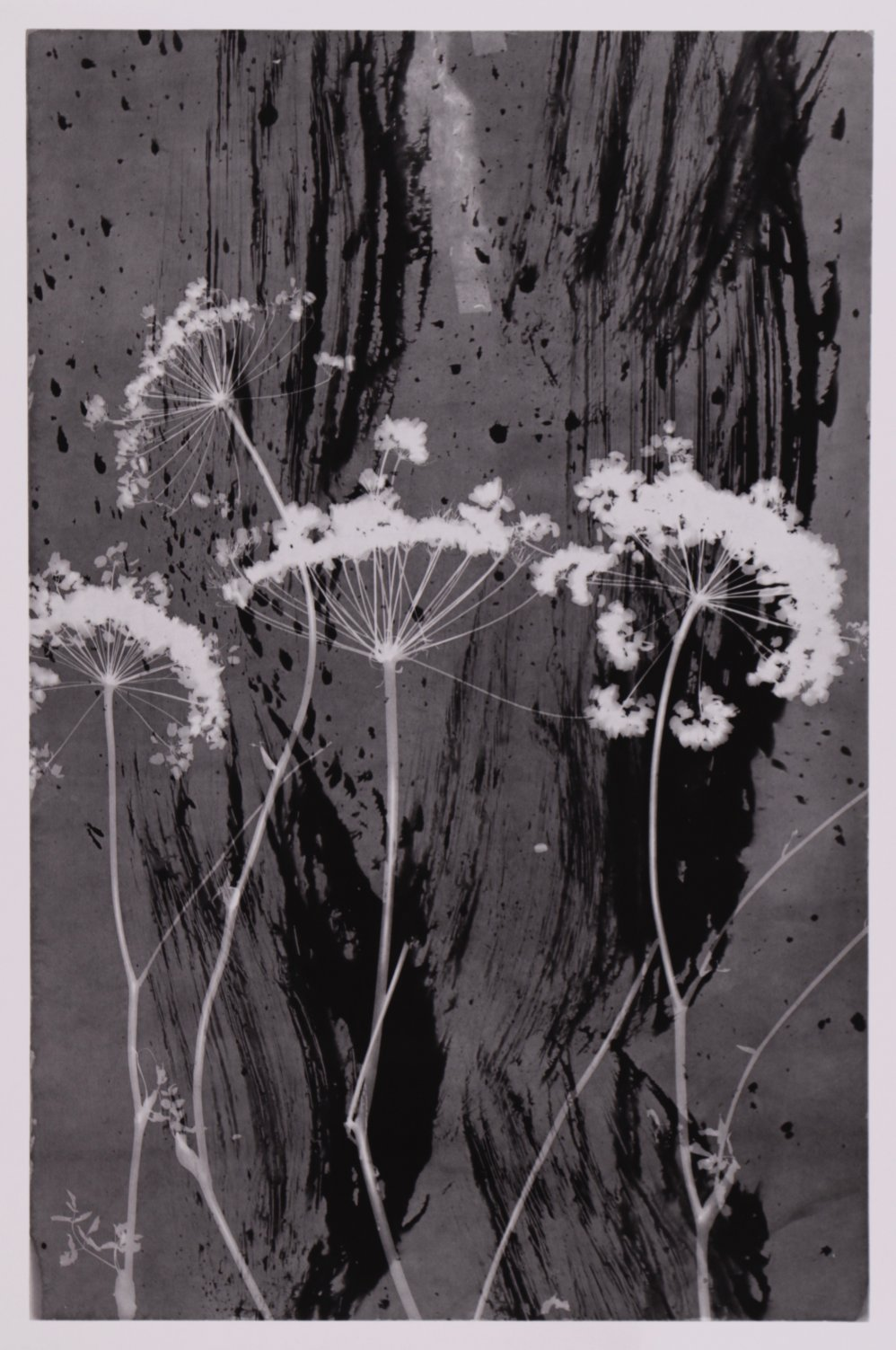High vegetation (2005) - Ilan Wolff